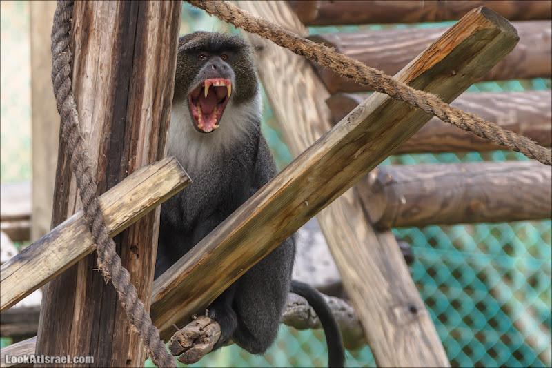 Парк обезьян в лесу Бен Шемен