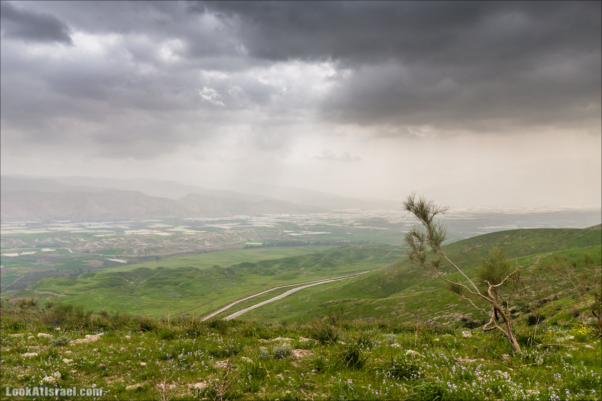 LookAtIsrael.com - Заповедник Ум Зука в Иорданской долине, Израиль | Um Zuka Reserve, Jordan valley, Israel | שמורת אום זוקה בבקעת ירדן