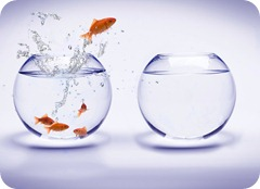 fish-bowl-backgrounds-wallpapers