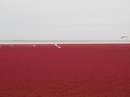 panjin-red-beach-9