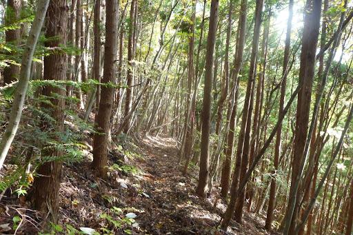木漏れ日の中を走る気持ちよさ。空気はすっかり冬なので乾燥していますが、雨の影響かトレイルは湿っていて、滑りやすい。