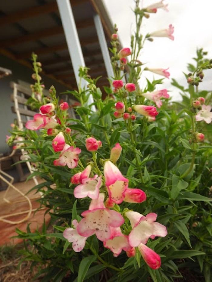 garden flowers nov 2013 (5)