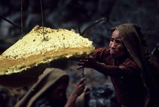 honey-cacciatori-nepal-9