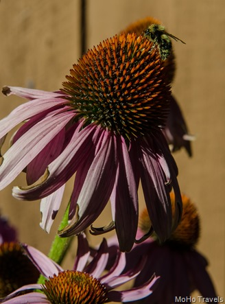 blooming in September 2014 (5 of 21)