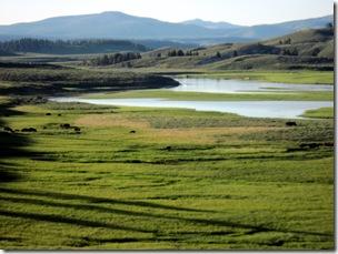Hayden Valley, Yellowstone NP