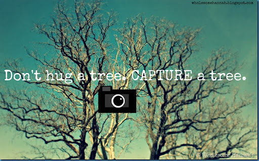 capture a tree