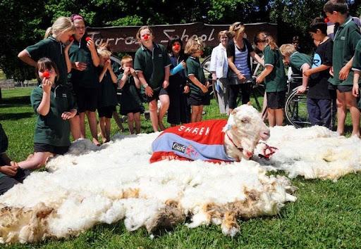 shrek-the-sheep-8