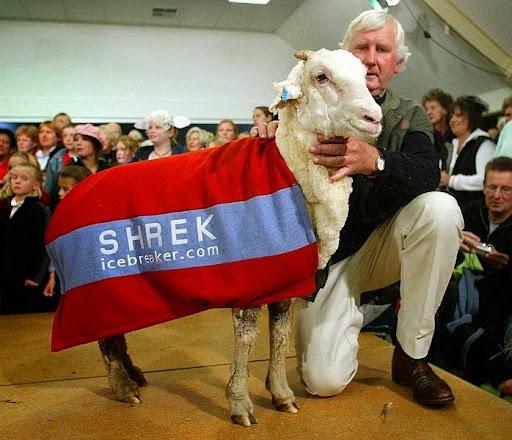 shrek-the-sheep-2