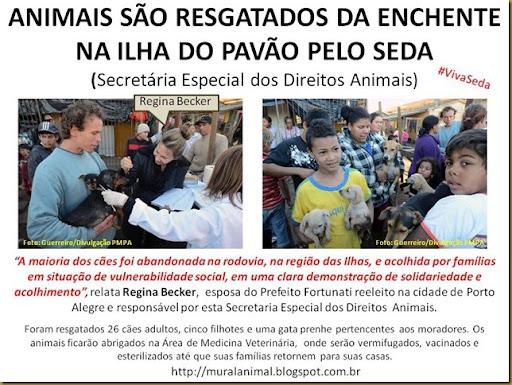 ANIMAIS SÃO RESGATADOS DA ENCHENTE NA ILHA