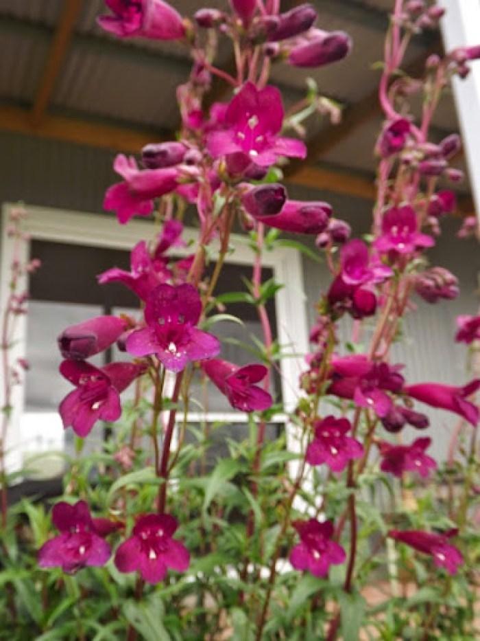garden flowers nov 2013 (8)