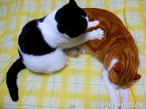 cat-massage-3