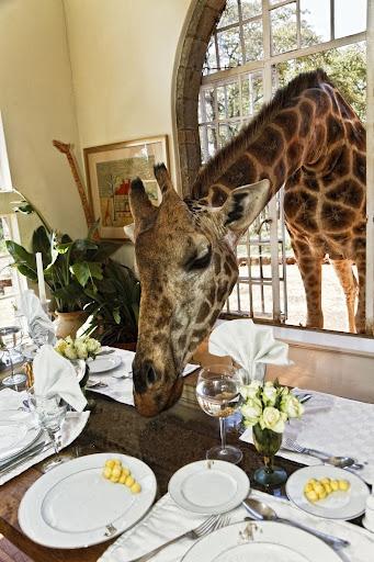 giraffa-manor-10