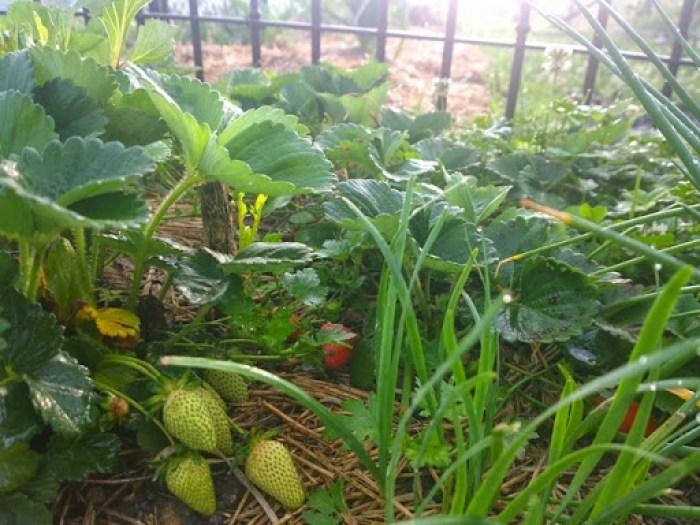 my garden oct 2014 (17)