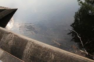 ダム湖側の余水吐を望む