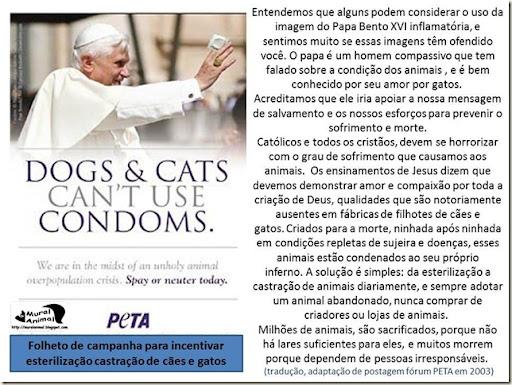 papa_ama_gatos (11)