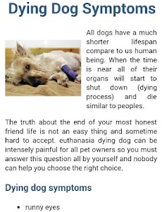 Dog Symptoms Cure screenshot 4