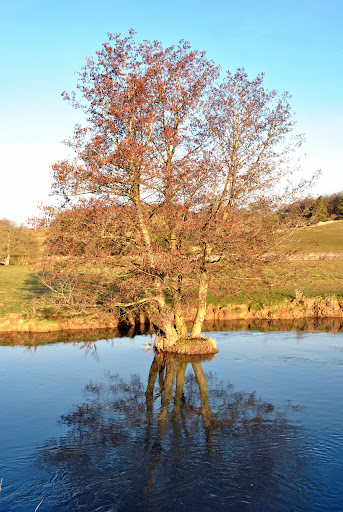 The Strange Tree in the Morning Sun
