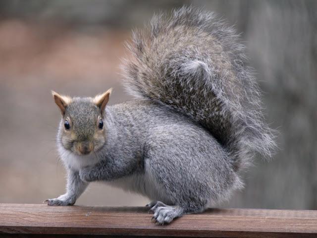 Squirrel du jour