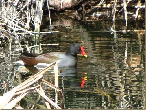 sweetwater wetlands_096