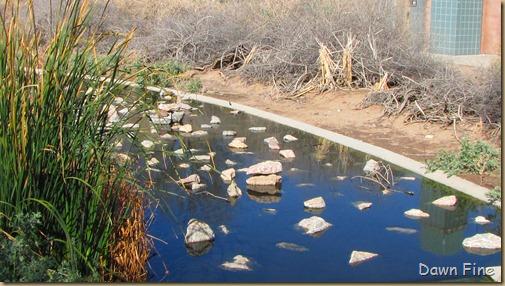 sweetwater wetlands_006