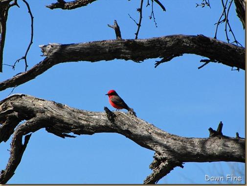 bird walk catalina state park_051