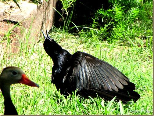 big sit birds_023