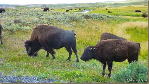 mammoth to yellowstone lake car tour_20090903_056