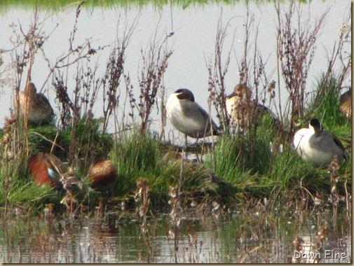 Consumnes birding_034