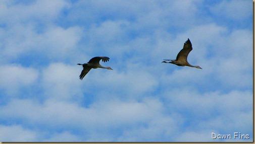 Consumnes birding_155