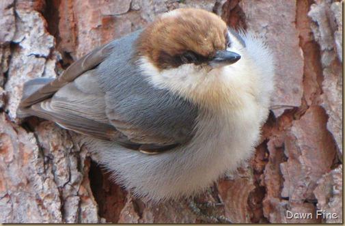 Birds and bark butter_057