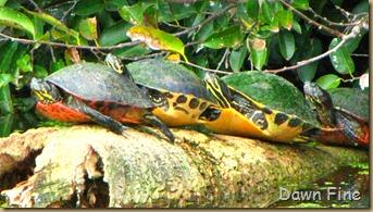 Turtle (7)