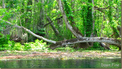 Silver Springs State Park_230