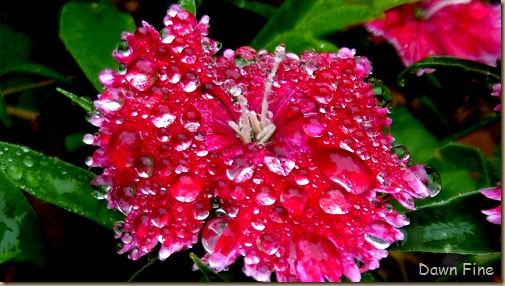Water droplets and flowers_048