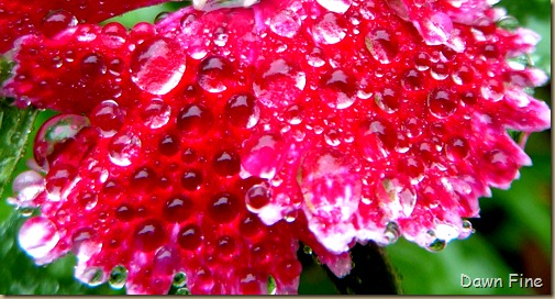 Water droplets and flowers_052