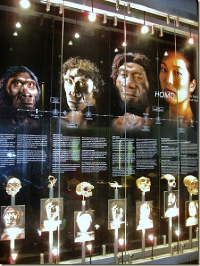Cradle of Humankind Museum South Africa