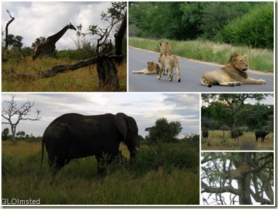 South Africa's Big 5