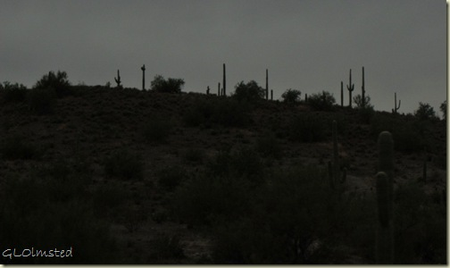 04 Saguaros against gray sky SR74 E AZ (1024x606)