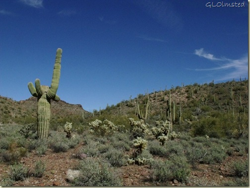 05 Saguaros BLM desert off Vulture Mine Rd Wickenburg AZ (1024x768)