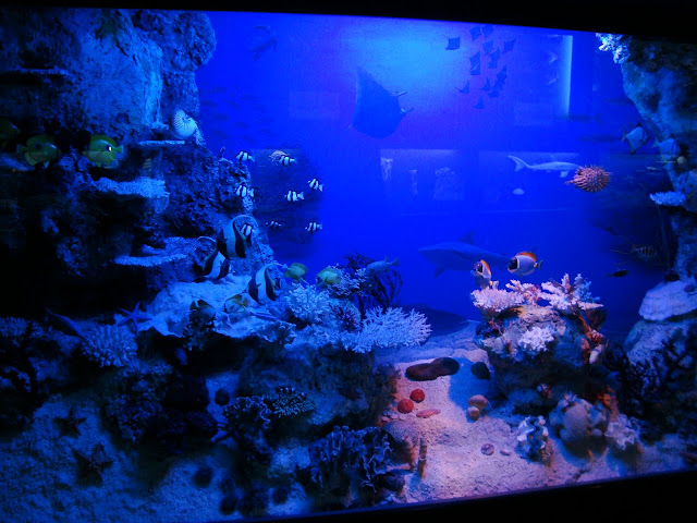 Diorama - Rafa koralowa