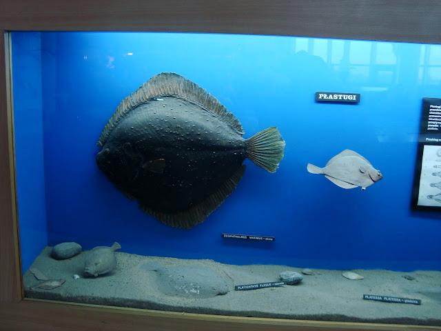 Gabloty prezentujące florę i faunę Bałtyku - Sala Bałtycka
