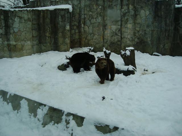 Tymczasowe lokatorki wrocławskiego zoo na wybiegu