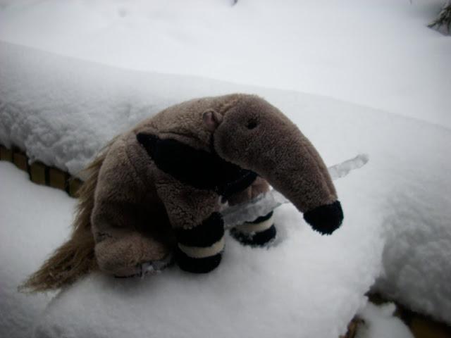 Mrówkojad z lodowym szpikulcem - kto by pomyślał...