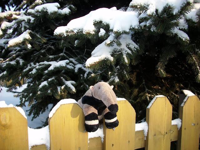 Zimowy Tadeusz - gdzieś w Wielkopolsce...