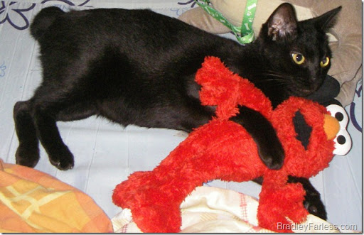 Elmo and our cat Thumper, hanging out in the Philippines.