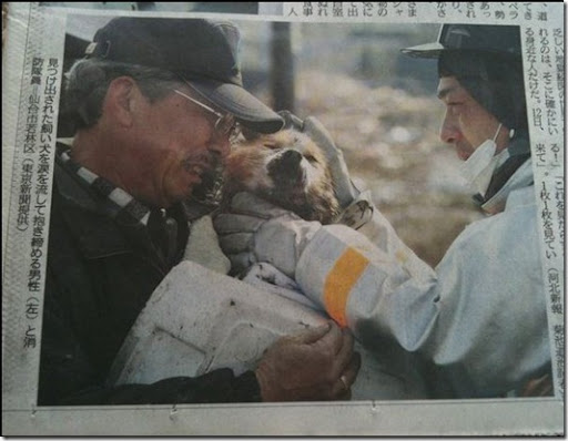 Dog Rescued in Japan