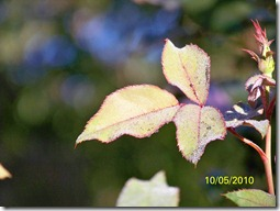 Fran's Fall Photos 032