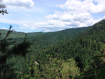 view from the crag...look at all the trees!