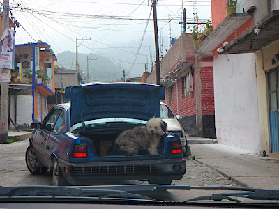 dogs everywhere in the mountain town of San Rafael at the base of the Iztaccihuatl volcano