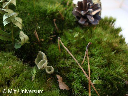 Dekoration svampar mitt universum for Dekoration universum