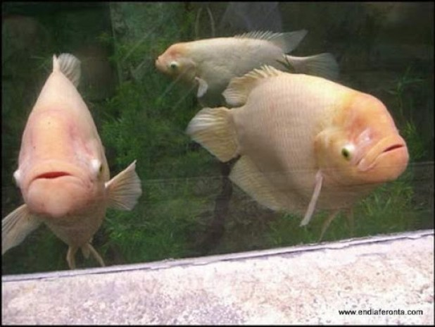 fish-faces28.jpg